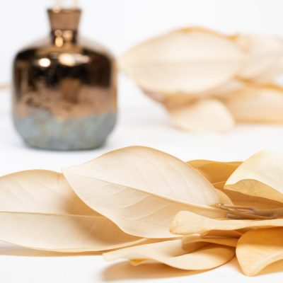 Magnolia - Bunch