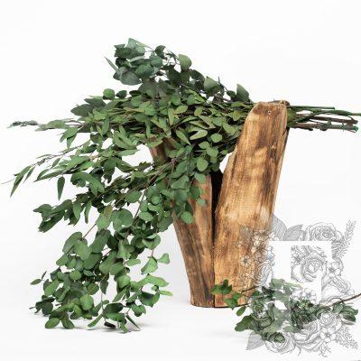 Standard Eucalyptus Stuartina - Bunch
