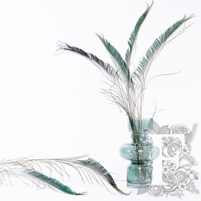 Peacock Sword Feathers - Pack of 6