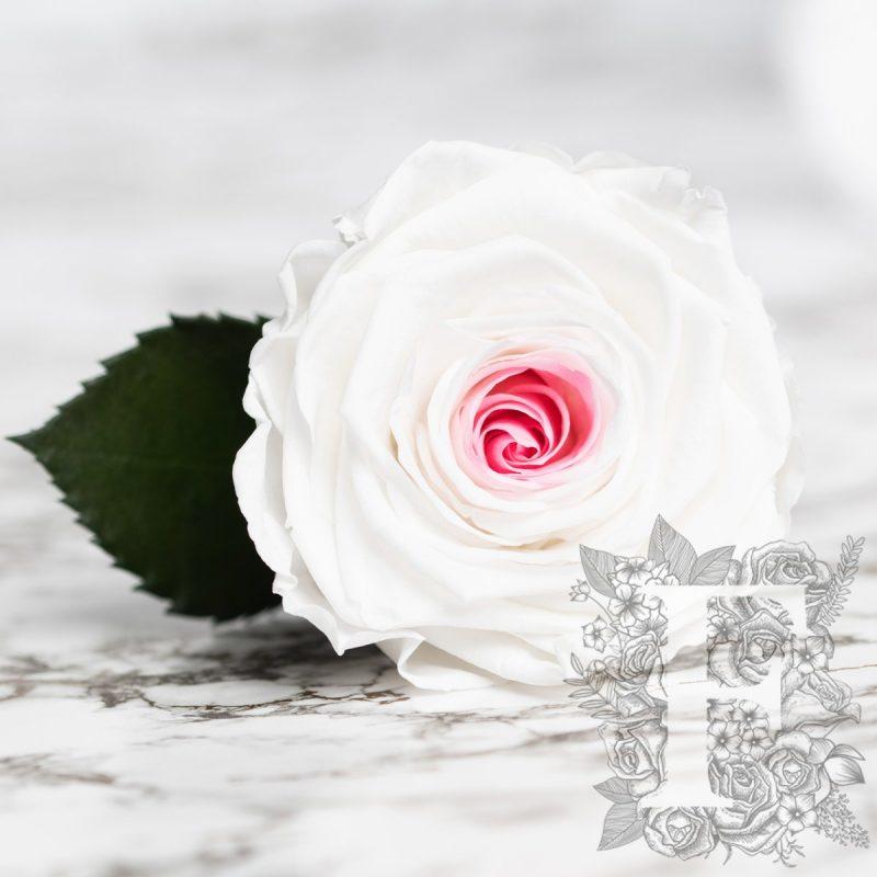 Mignon pink-white