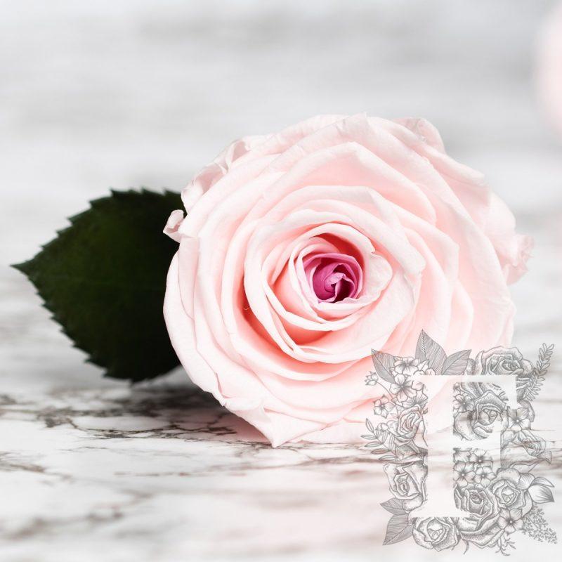 Mignon pink-burgundy
