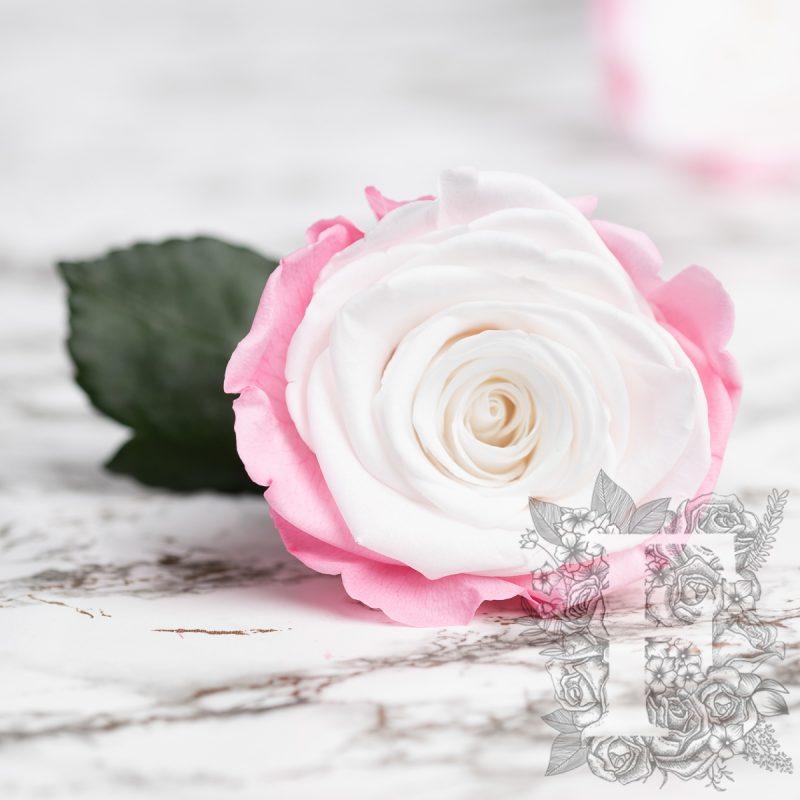 Blanc-Pink