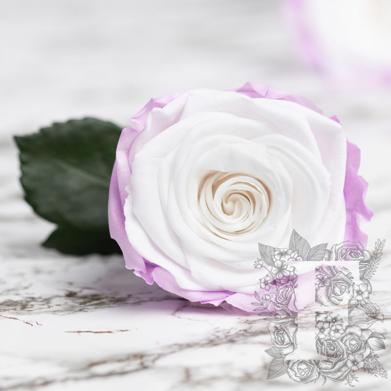 Blanc-Lilac