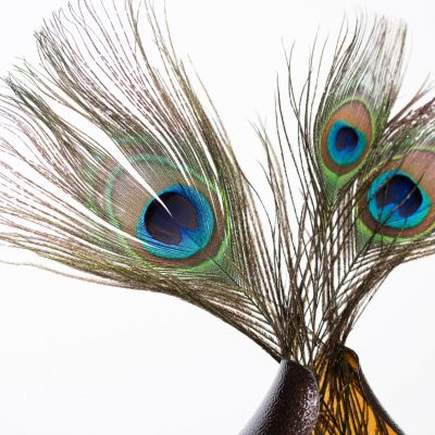 Peacock Feather - Pack of 5