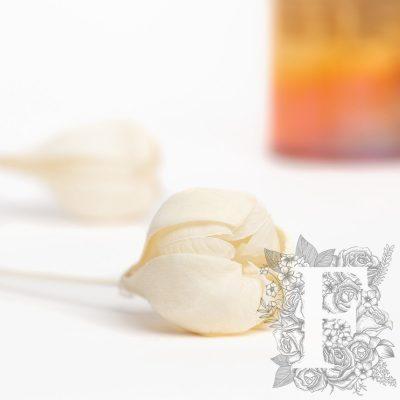 Tefe Rose - 5 Stems