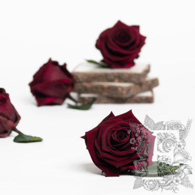 Fora exclusive roses - Medium - 6 Heads - Plum