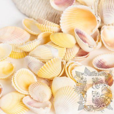 Cardium Shell - Pack