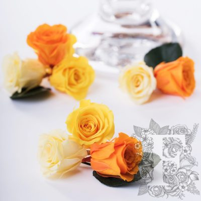 Rose Kanon - Gradation - 9 Heads