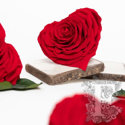 Fora exclusive roses - Heart - Forever red