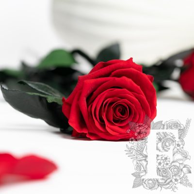 Fora exclusive roses - Rose with stem - 50cm - Forever red