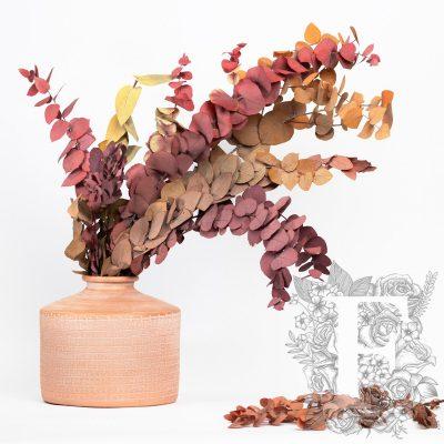 Autumnal Stuartina - bunch
