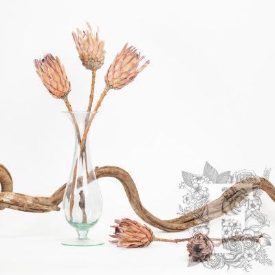 Ice Flower - 3 stems