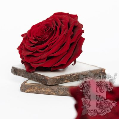 Fora exclusive roses - Jumbo - Forever red