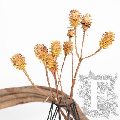Saligum - Branch - 3 Stems
