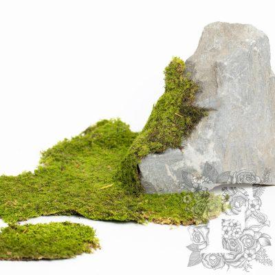 Rock Moss - 1kg