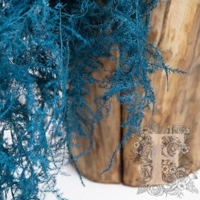 Asparagus Fern - Coloured - Bunch