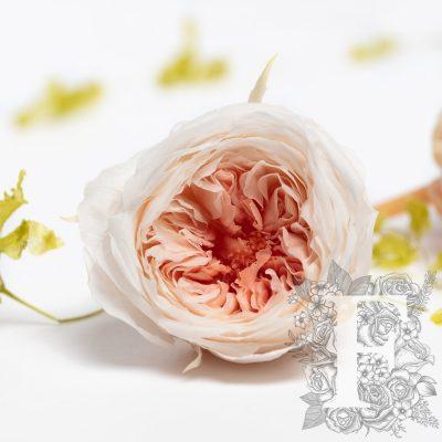 Garden Rose - Temari Mille-Feuille - 8 Heads