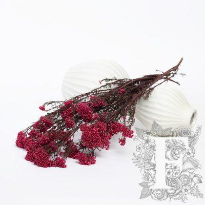 Rice Flower - Bunch