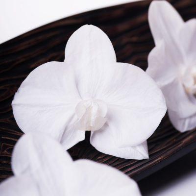 Phalaenopsis White Beauty - 3 Heads