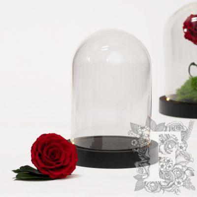 Bell jar - LED - Medium