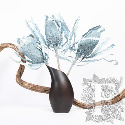 Banksia Hookerana exclusive - Large Leaves - Stem