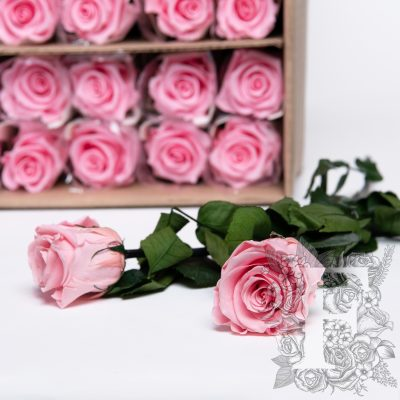 50cm Rose With Stem - 30 Stems Bulk