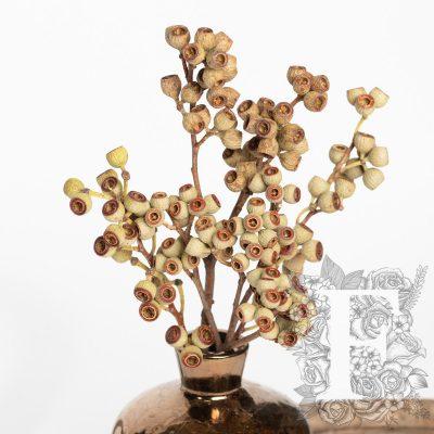 Ambernuts Branch - 3 Stems