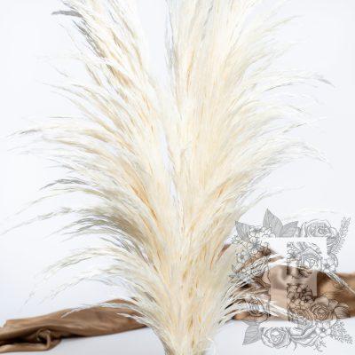 Pampas - Premium - 1 Stem - 110cm