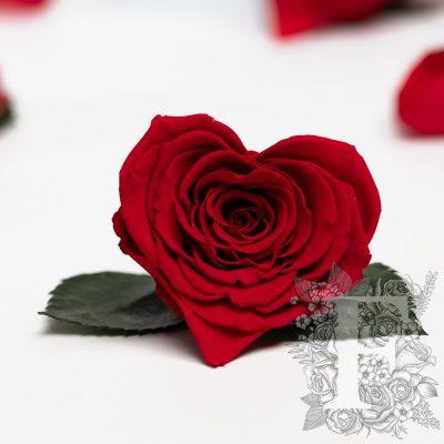 RoseAmor - Small Heart - 4 Heads