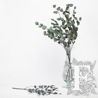 Eucalyptus - Gunny - Bunch