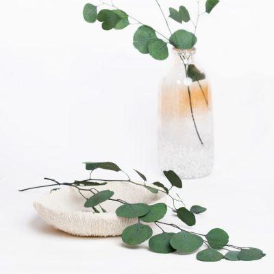 Standard Eucalyptus Populus - Bunch