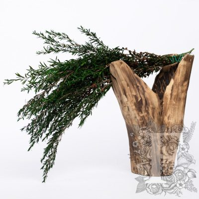 Longifolia - Bunch