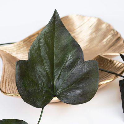 Large Ivy Leaf - 10 Stems