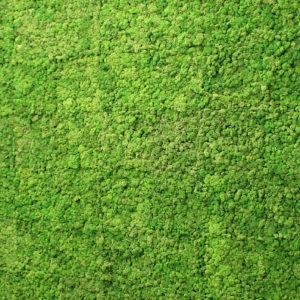 Flat Moss
