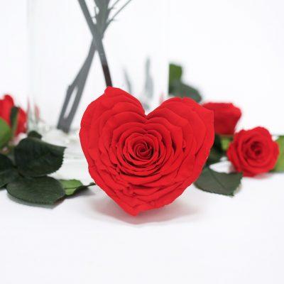 Heart Rose - XXL -1 Head