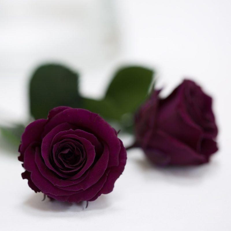 Purple (Pur-01)