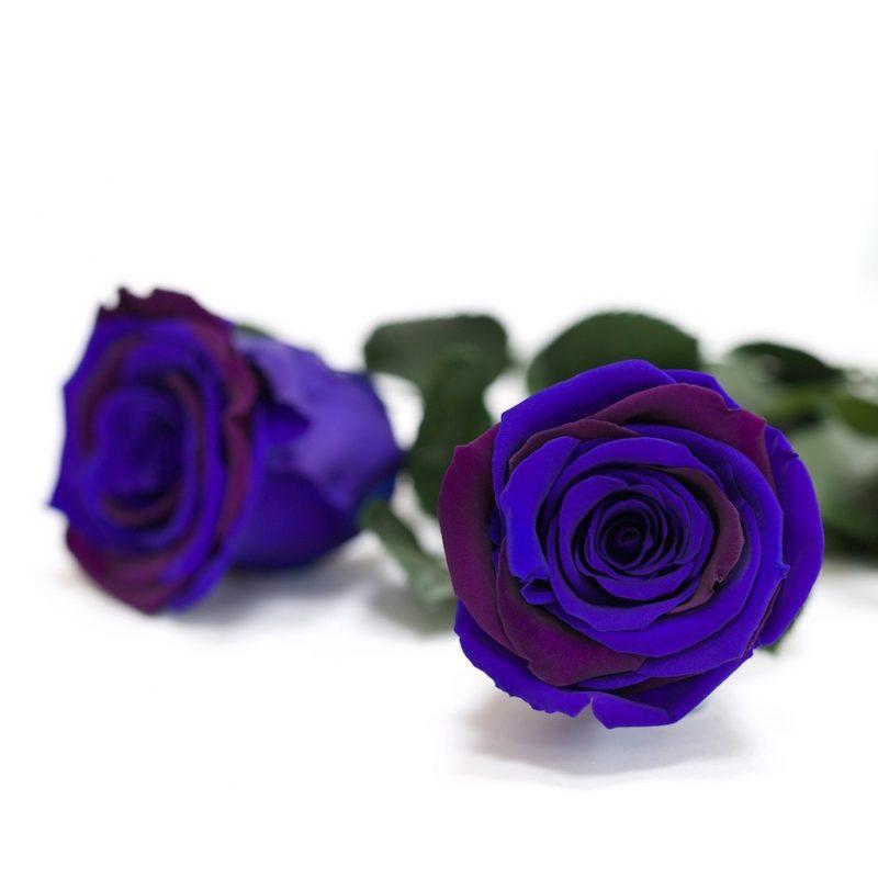 Fora (blu/pur)