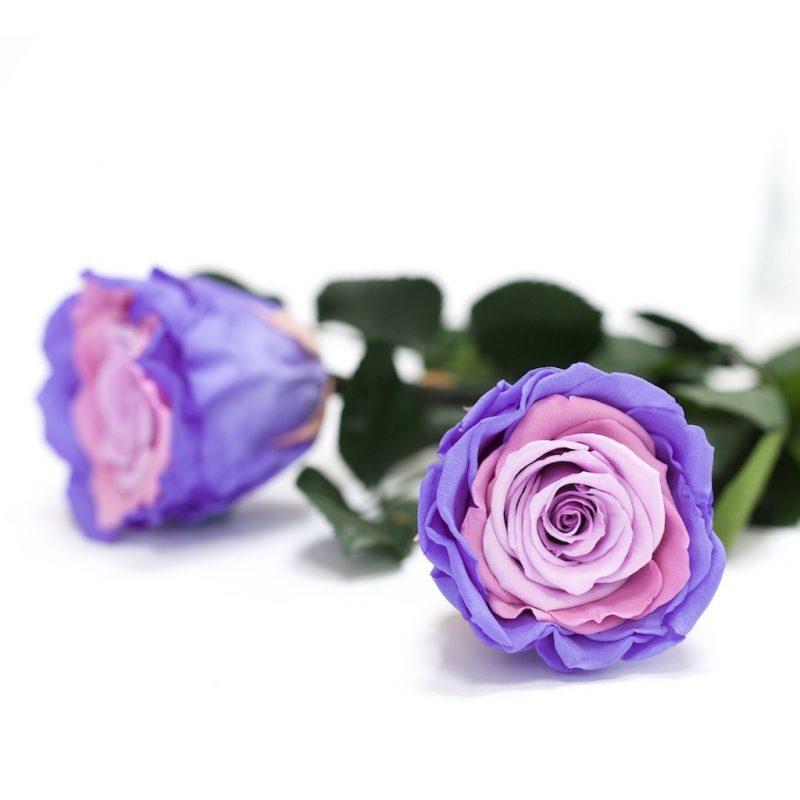 Fora (violet)