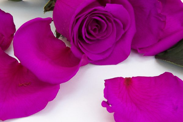 Our preservation process of rose petals enables you to enjoy Fora Nature's preserved petals for years. Silky soft, vibrant in colour and preserved in time, that suit any decoration you create.