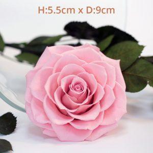 RoseAmor - Bonita