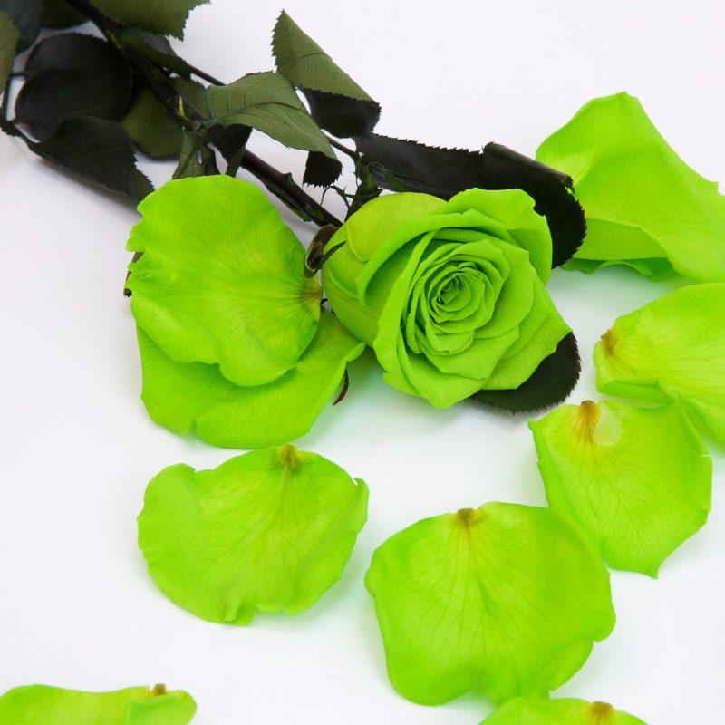 Green (Gre 05)