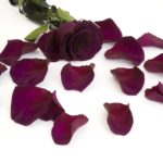 Purple (Pur 01)