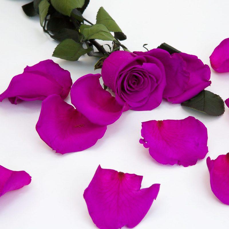 Purple (Pur 02)