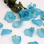 Blue (Blu 01)
