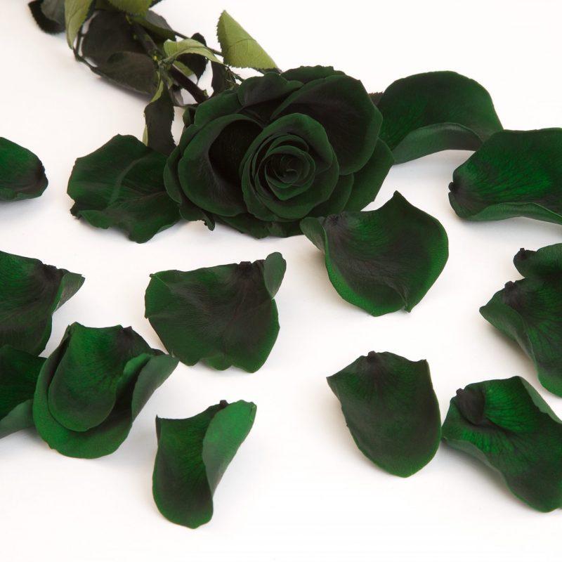 Green (Gre 02)