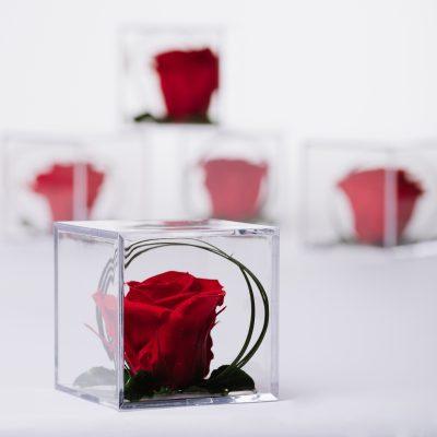Gift Box - Acrylic - Small