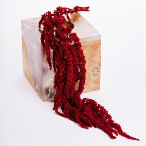 Amaranthus BOX