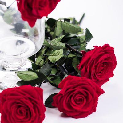 50cm Premium Rose With Stem - 12 Stems Bulk
