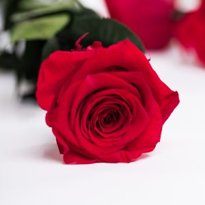 50cm Rose With Stem (Bulk)