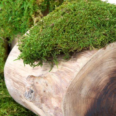 Standard Flat Moss - Bulk -2.5KG